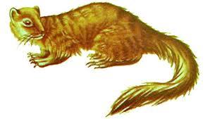Il Miacis, specie originaria dalla quale derivano i canidi