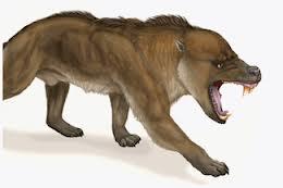 Il Tomarctus, progenitore del cane moderno