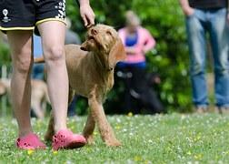 L'educazione del cane all'aria aperta deve essere preceduta da ripetuti esercizi in luogo privo di distrazioni per l'animale