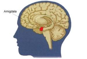 9:15 - Amigdala